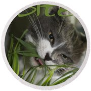 Round Beach Towel featuring the photograph Time To Dine by Vicki Ferrari