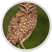 Tiny Burrowing Owl Round Beach Towel