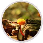Tiny Mushroom Round Beach Towel by Melissa Petrey