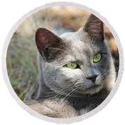 Tom Cat Round Beach Towel