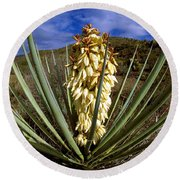 Torrey Yucca In The Chisos Mountains Round Beach Towel