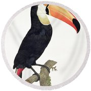 Toucan Round Beach Towel by Jacques Barraband