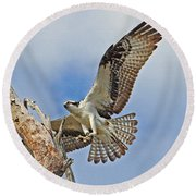 Touch Down - Osprey In Flight Round Beach Towel