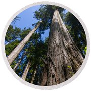 Towering Redwoods Round Beach Towel by Paul Rebmann