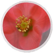 Toyo Nishiki Japanese Flowering Quince  Picture A Round Beach Towel