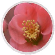 Toyo Nishiki Japanese Flowering Quince  Picture C Round Beach Towel