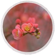Toyo Nishiki Japanese Flowering Quince  Picture D Round Beach Towel