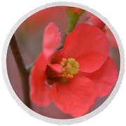 Toyo Nishiki Japanese Flowering Quince  Picture F Round Beach Towel