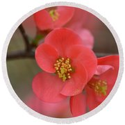 Toyo Nishiki Japanese Flowering Quince  Picture G Round Beach Towel