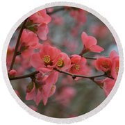 Toyo Nishiki Japanese Flowering Quince  Picture H Round Beach Towel
