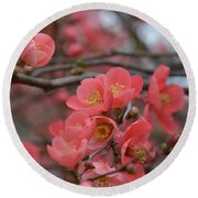 Toyo Nishiki Japanese Flowering Quince  Picture J Round Beach Towel