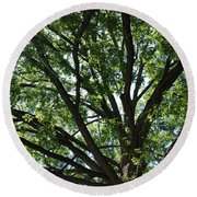 Tree Canopy Sunburst Round Beach Towel