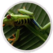 Tree Frog 16 Round Beach Towel by Bob Christopher
