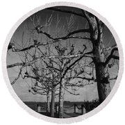 Tree In A Row  Round Beach Towel