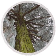Round Beach Towel featuring the photograph Tree In Winter by Felicia Tica