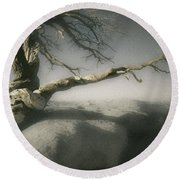 Tree Of Ages Round Beach Towel