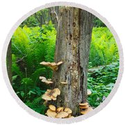 Tree Remnant Round Beach Towel