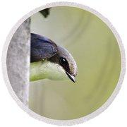 Tree Swallow Closeup Round Beach Towel by Christina Rollo