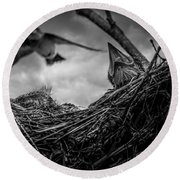 Tree Swallows In Nest Round Beach Towel by Bob Orsillo