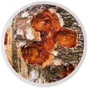 Tree Trunk Closeup - Wooden Structure Round Beach Towel