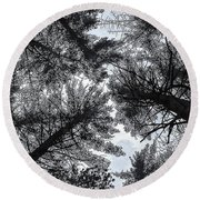 Trees In Winter Round Beach Towel