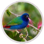 Round Beach Towel featuring the photograph Tricolor Parrot Finch by Les Palenik