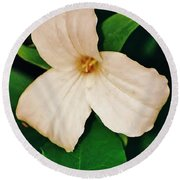 Round Beach Towel featuring the photograph Trillium by Daniel Thompson