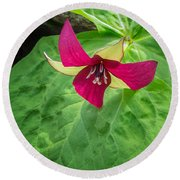 Trillium Portrait Round Beach Towel by Bill Wakeley
