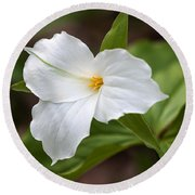 Round Beach Towel featuring the photograph Trillium by Todd Blanchard