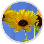 Trio In The Sun - Yellow Daisies By Diana Sainz Round Beach Towel