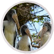 Triplet Wood Stork Nestlings Round Beach Towel by Richard Bryce and Family