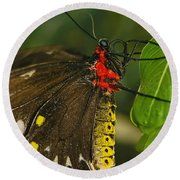Round Beach Towel featuring the photograph Troides Helena Butterfly  by Olga Hamilton