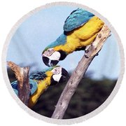 Tropical Parrots In Love Round Beach Towel