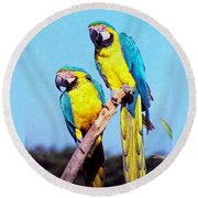 Tropical Parrots In San Francisco Round Beach Towel