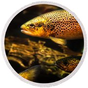 Trout Swiming In A River Round Beach Towel