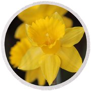 Trumpet Daffodil Named Exception Round Beach Towel by J McCombie