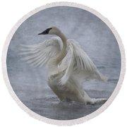 Trumpeter Swan - Misty Display Round Beach Towel