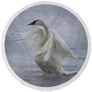Trumpeter Swan - Misty Display Round Beach Towel