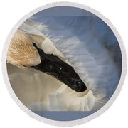 Round Beach Towel featuring the photograph Trumpeter Swan - Safe Place by Patti Deters