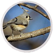 Tufted Titmouse - 1 Round Beach Towel by Lana Trussell