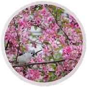 Tufted Titmouse In A Pear Tree Round Beach Towel