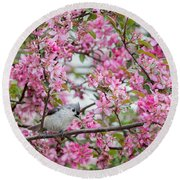Tufted Titmouse In A Pear Tree Square Round Beach Towel