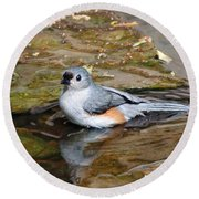 Tufted Titmouse In Pond Round Beach Towel