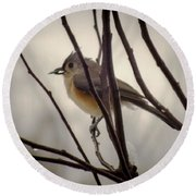 Tufted Titmouse Round Beach Towel by Karen Wiles