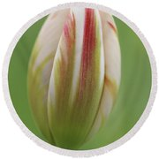 Tulip Red And White In Spring Round Beach Towel