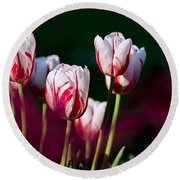 Round Beach Towel featuring the photograph Tulips Garden Flowers Color Spring Nature by Paul Fearn
