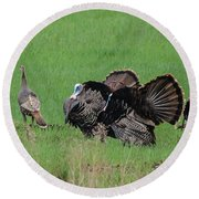 Turkey Mating Ritual Round Beach Towel