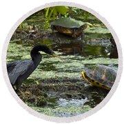 Turtles And Anhinga Round Beach Towel
