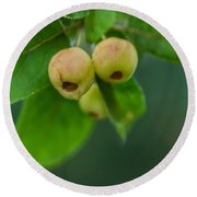 Round Beach Towel featuring the photograph Twin Berries by Jacqui Boonstra