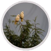 Twin Cockatoos Round Beach Towel